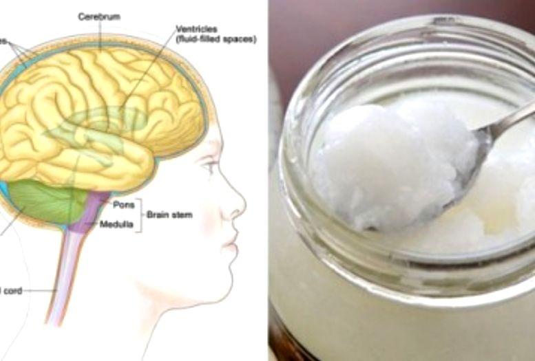 kokosbrain-Kokosöl ist Supernahrung für dein Gehirn
