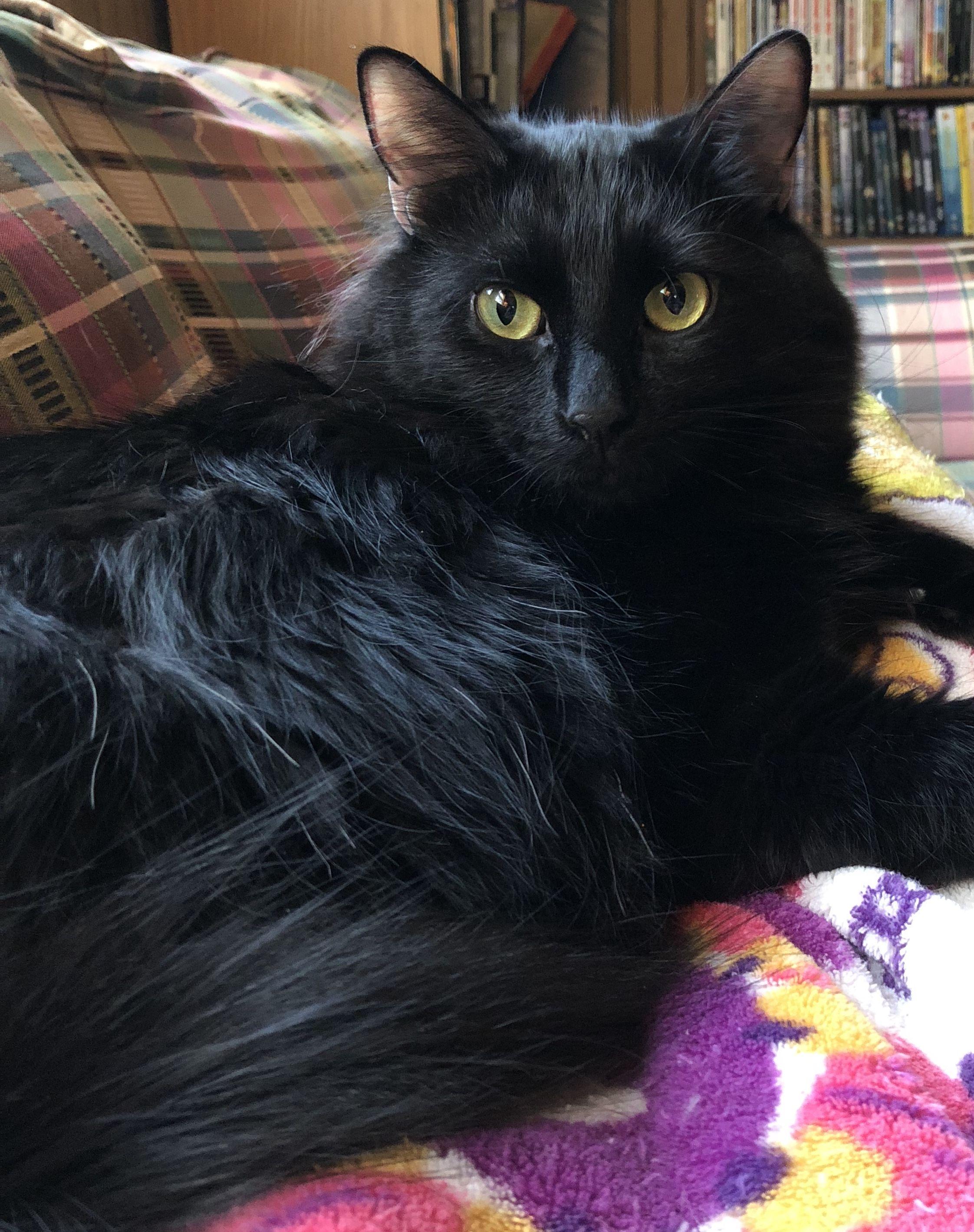 Beautiful Black Cats Crazy Cats Cute Cats Cats