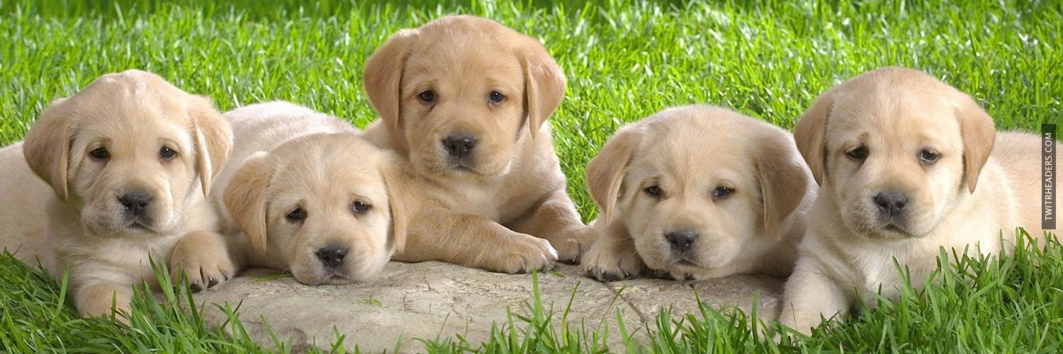 Cute Dogs Twitter Headers Free Twitter Header, Cover and