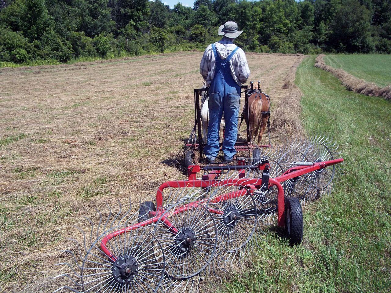 Mini Horse Haying Working And Driving Ponies Mini