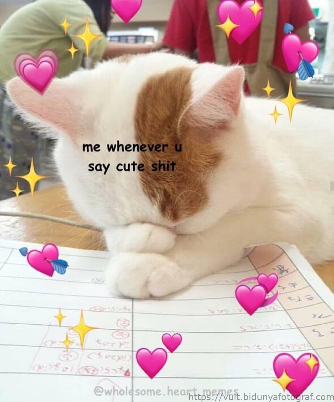 Memes Saludables En Instagram Etiqueta A Alguien Speci Alguien Instagram Memes Memesdeanimalesamor Memesdeani Love You Meme Cute Love Memes Cute Memes