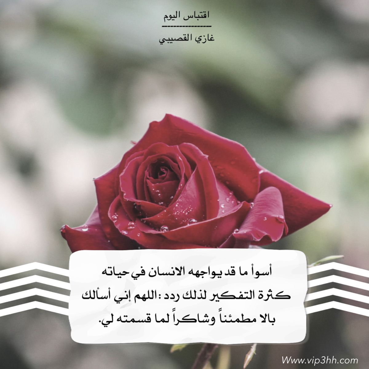 Vip3hh Flowers Plants Rose