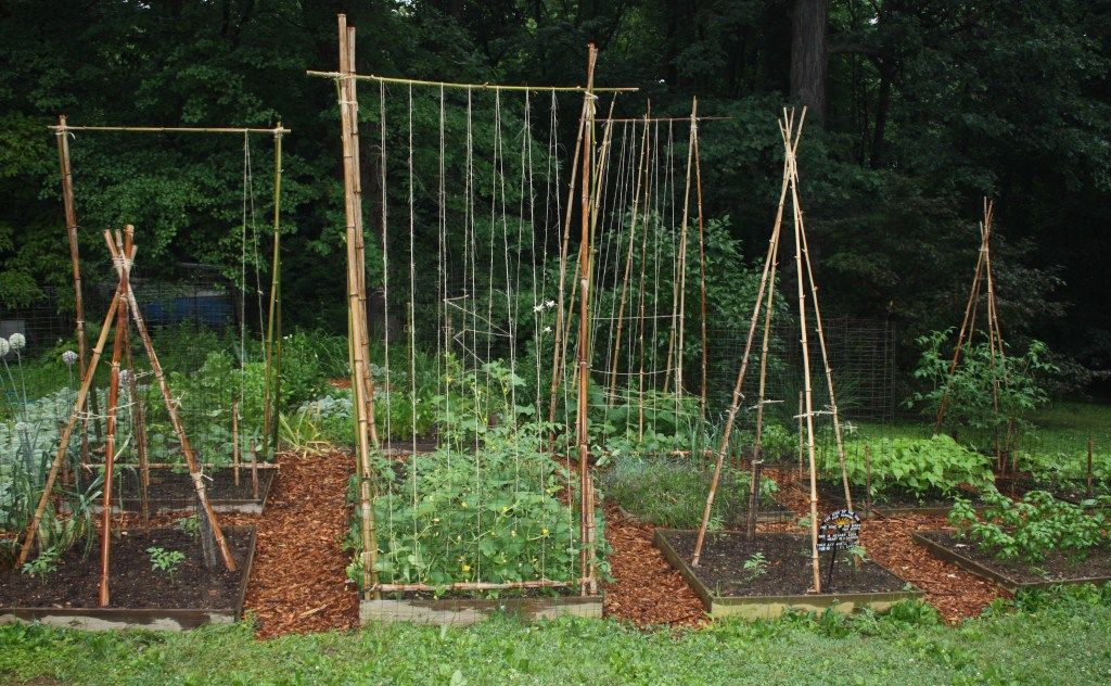 Attractive Bamboo Trellis Ideas Part - 5: How To Build A Bamboo Trellis | Great Plants U0026 Projects | Pinterest | Bamboo  Trellis, Gardens And Garden Ideas