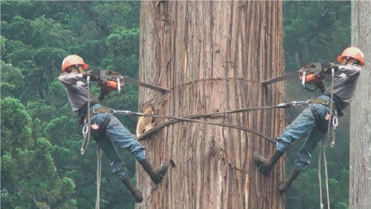 Amazing Dangerous Skills Fastest Tree Felling, Heavy