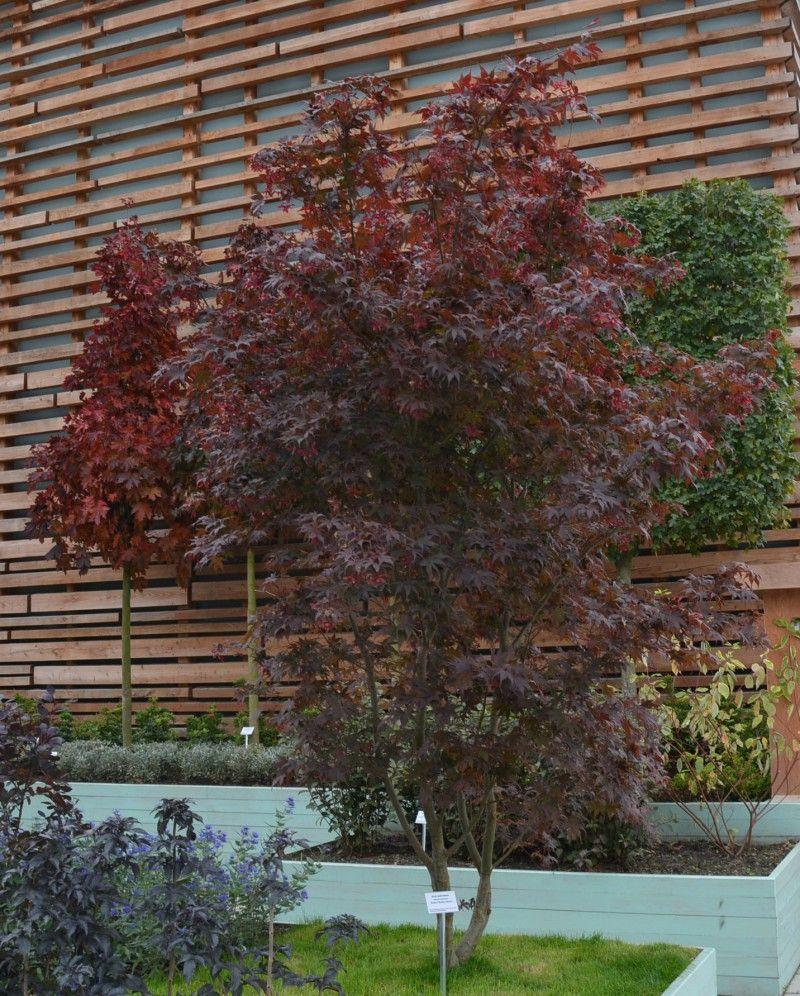 best 25 japanische pflanzen ideas on pinterest. Black Bedroom Furniture Sets. Home Design Ideas