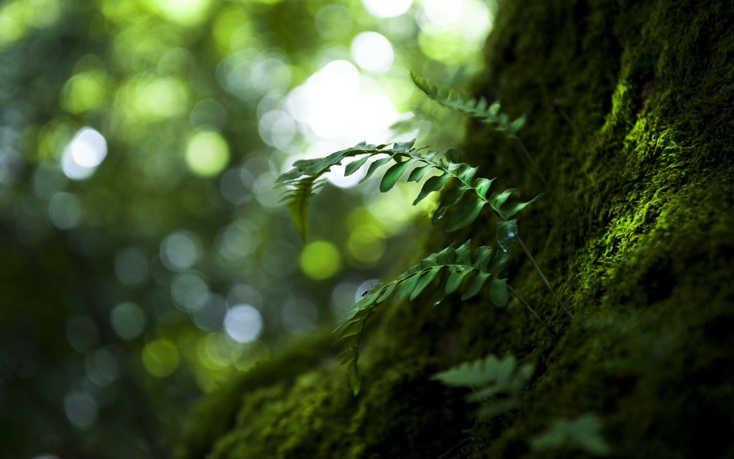 Green Leafed Plant Leaves Blurred Depth Of Field Macro Photography Sunlight Bokeh 2k Wallpaper Hdw Macro Photography Wallpaper Plant Background Plants