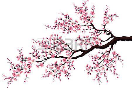 Rama De Un Arbol De Cerezo En Flor Aislado En Un Fondo Blanco Arbol De Cerezo Arbol De Cerezo Dibujo Flor De Cerezo