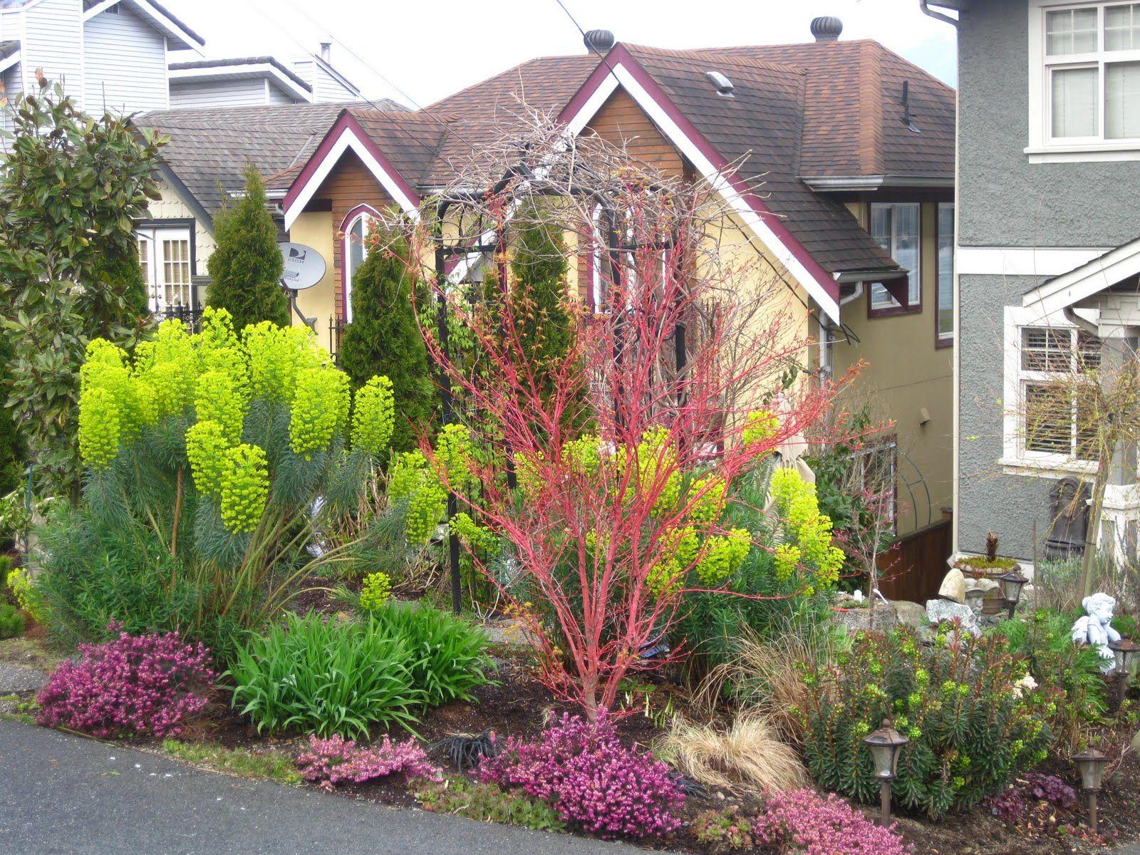 chartreuse euphorbia | outdoor | pinterest | garden ideas, gardens