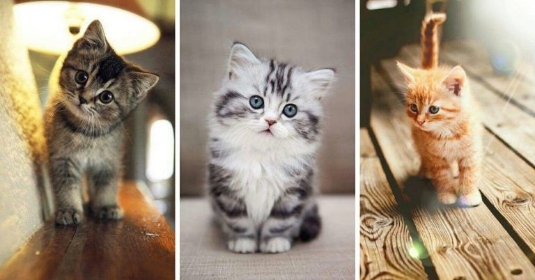 صور قطط صغيرة أجمل صور القطط الصغيرة في غاية الجمال بفبوف Animals Cats
