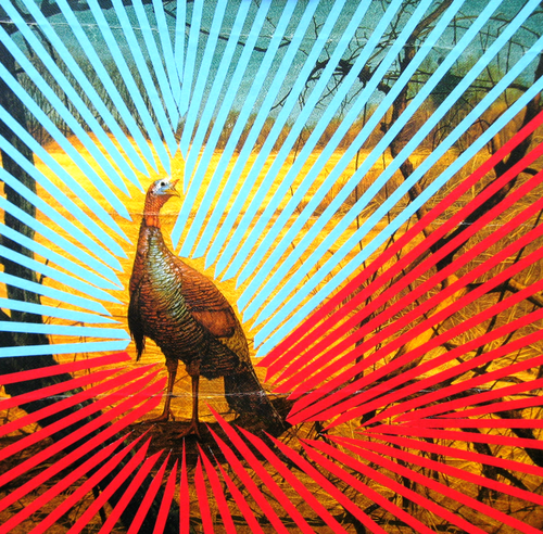 Joe Ryckebosch- peacock in tape art  http://joeryckebosch.com/news/