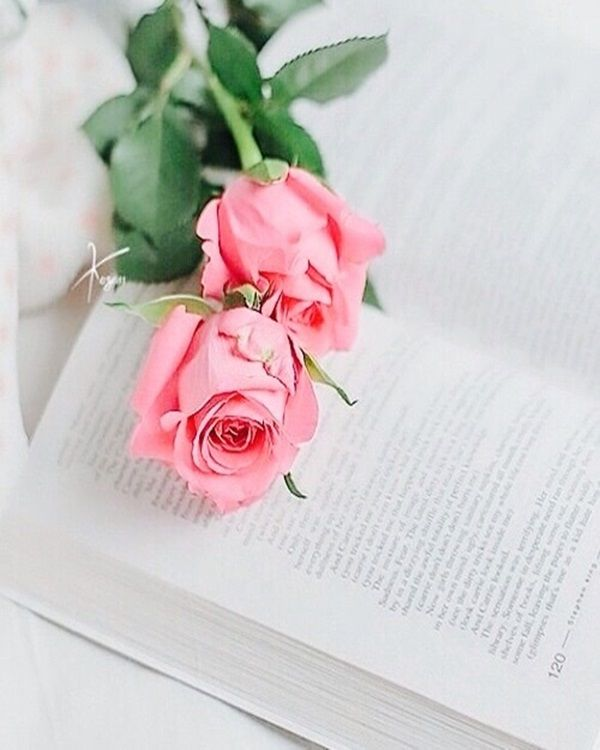 Pin de Vaishu en poetry Pinterest Rosas, Flores y Arreglos florales - rosas y corazones