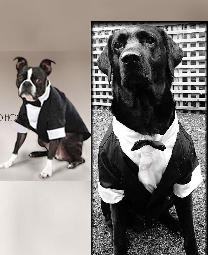 Dog New Tux Tuxedo Wedding Costume Clothing Bow Tie Male Uk Dog Tuxedo Pet Costumes Wedding Costumes