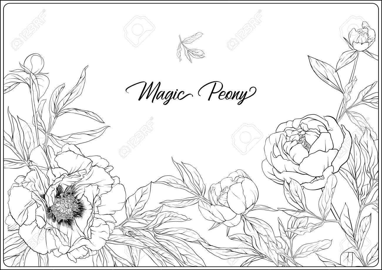 White Peony Coloring Page For The Adult Coloring Book Outline