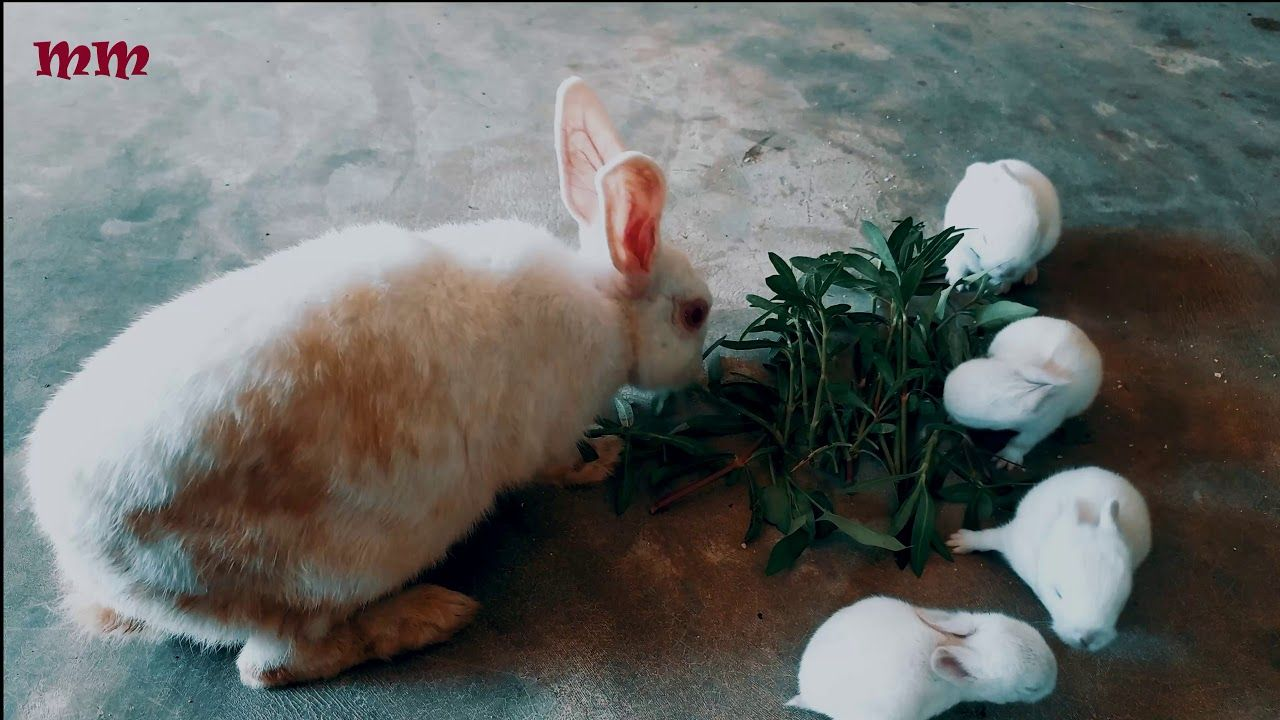 Pin By Rabbitvideos On Bunny Rabbit In 2020 Rabbit Baby Rabbit Eating Baby Eating