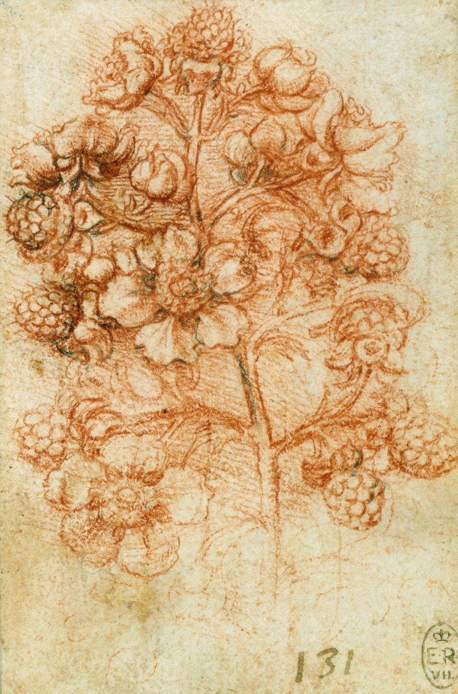 leonardo da vinci vinci amboise creation date c  leonardo da vinci vinci 1452 amboise 1519 creation date c 1505