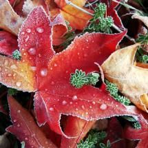 frost on the leaves.
