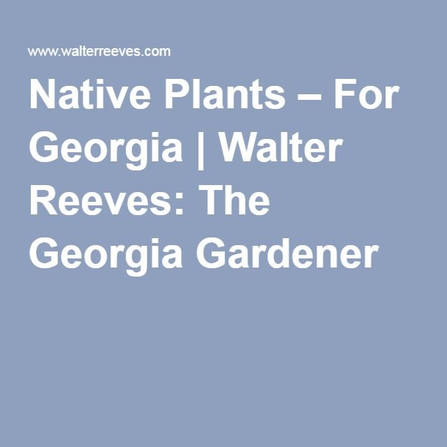 Native Plants  For Georgia  Walter Reeves The Georgia Gardener