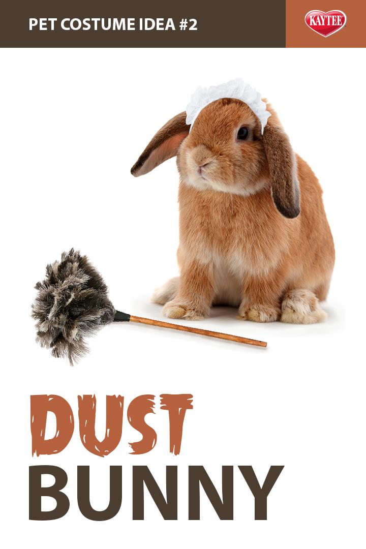 PetCostume idea Dust Bunny. 🐰 Pet halloween costumes