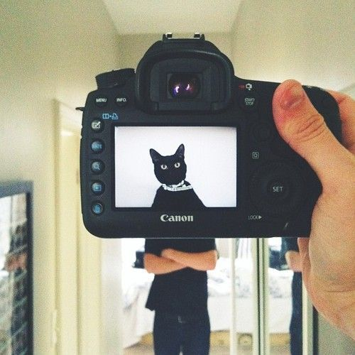 Petheadz: Do Pets Really Look Like Their Owners? / inspirationfeed.com
