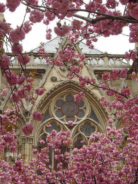 Notre Dame ~ Paris