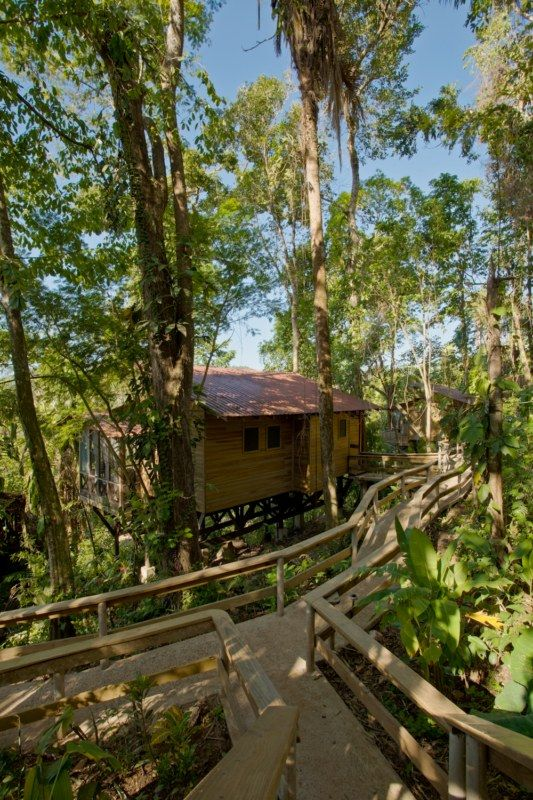 Belize Tree Houses at Ian Anderson's Caves Branch  |Belize Treehouse Accommodation Near Beach
