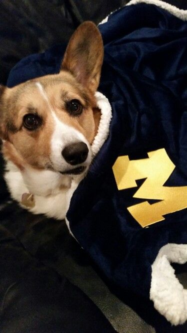 This Puppy Says Go Blue Go Blue Colorful Animals Furry Friend