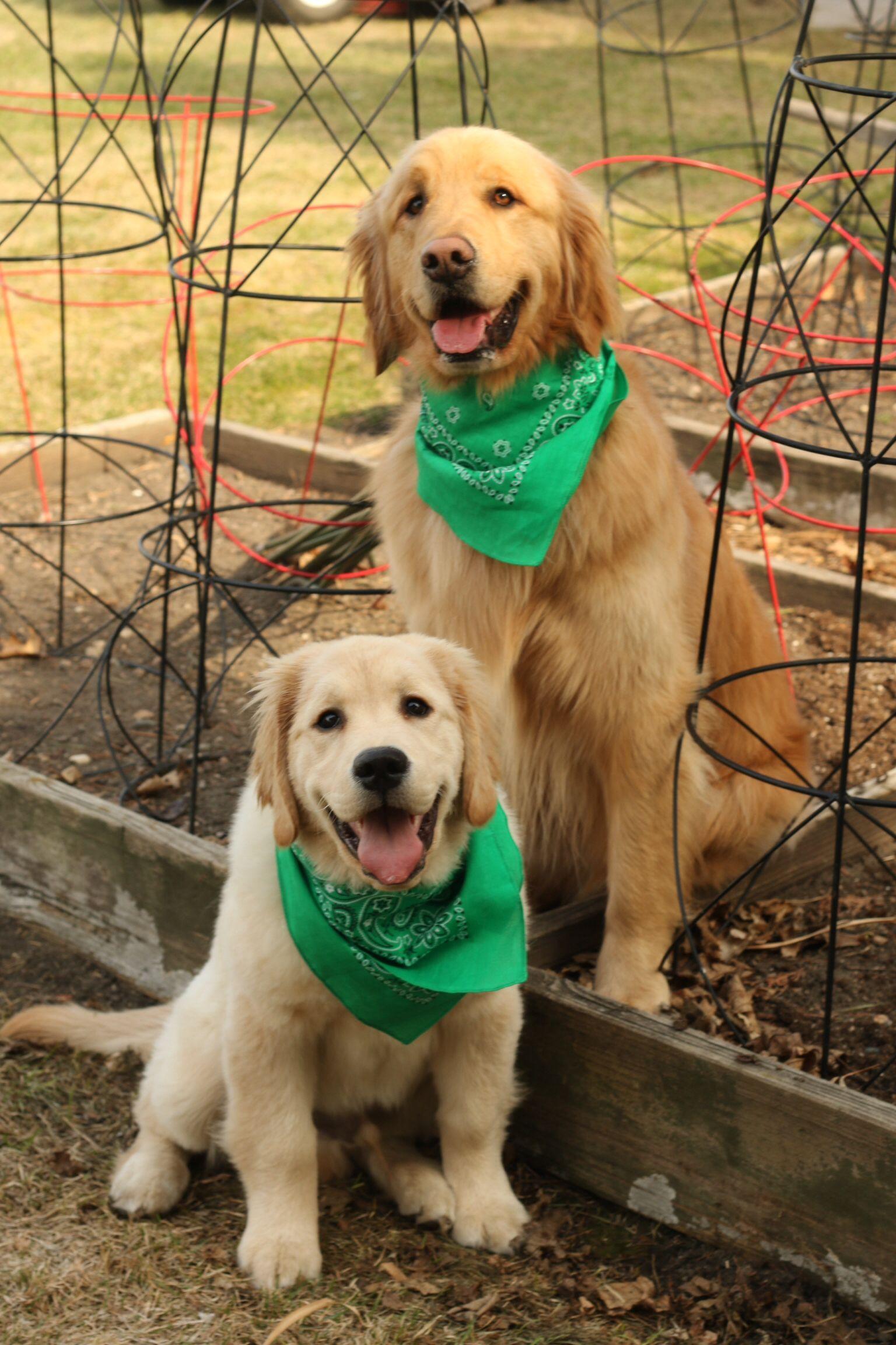 Happy earth day dogs golden retriever retriever puppy