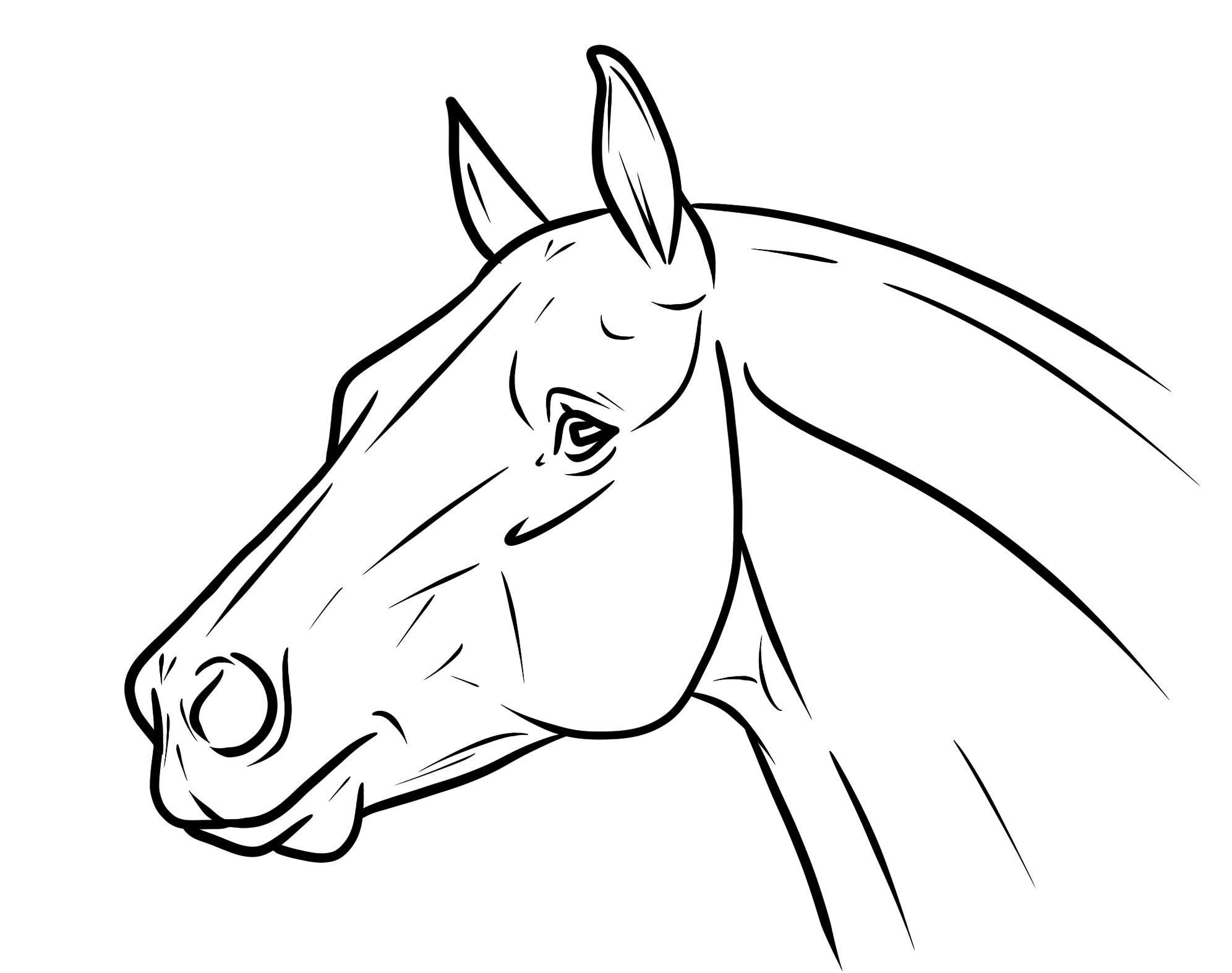 Horse Heads Google Search Horse Coloring Pages Horse Drawings Horse Head Drawing