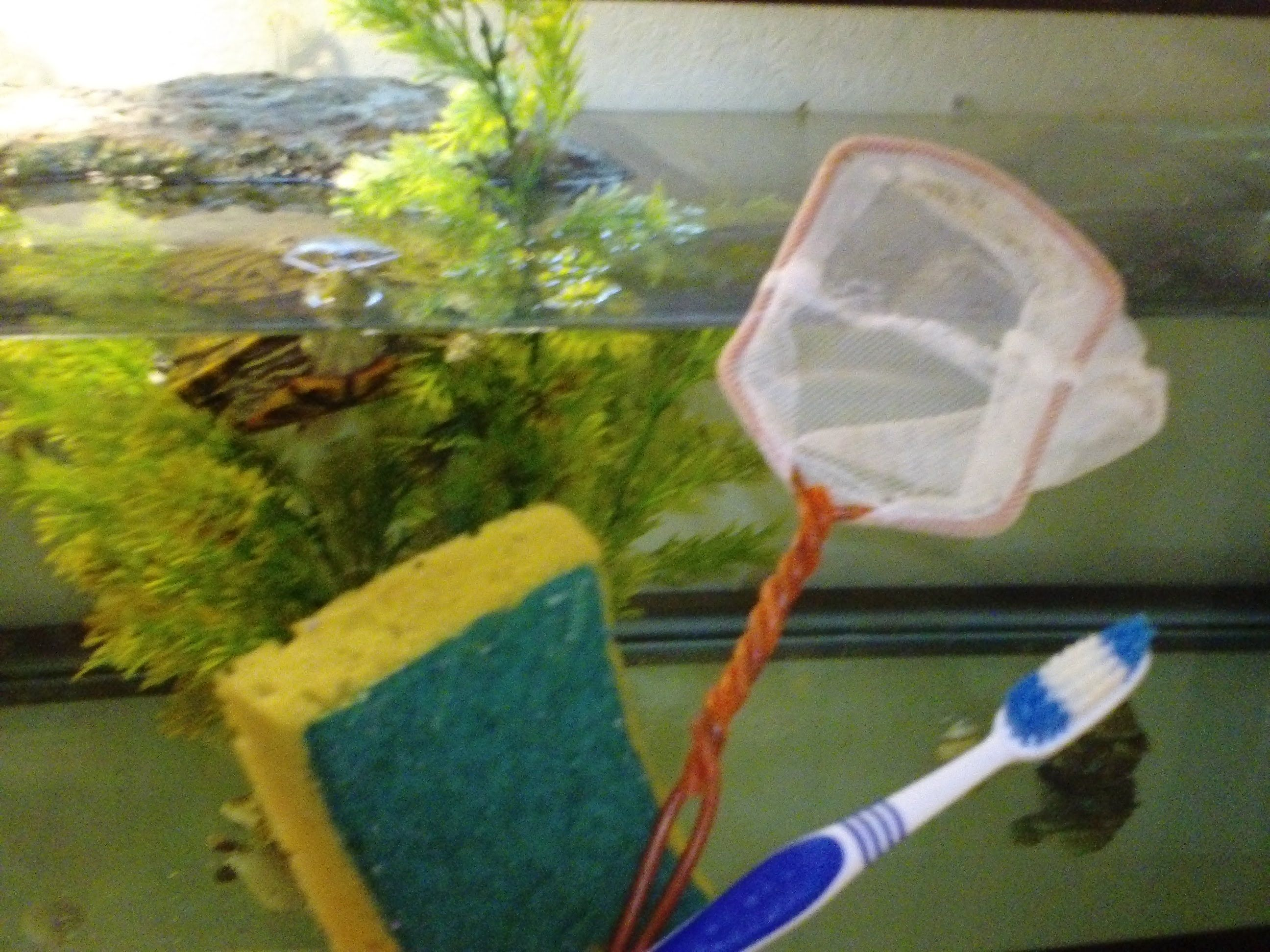 Top Tips on How To Keep Your Turtle Tank Clean and Algae Free