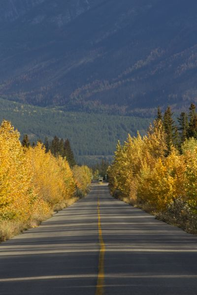 AUTUMN TRAVEL - side road in Jasper National Park, Alberta, Canada -- Natural events like raptor migrations thrill autumn's nature lovers! Get travel tips on autumn's Hawk Watches and elk ruts at http://www.examiner.com/article/astounding-nature-delights-with-autumn-wildlife-viewing