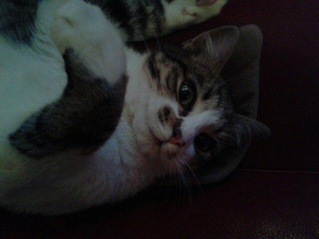 Il mio gatto...!!
