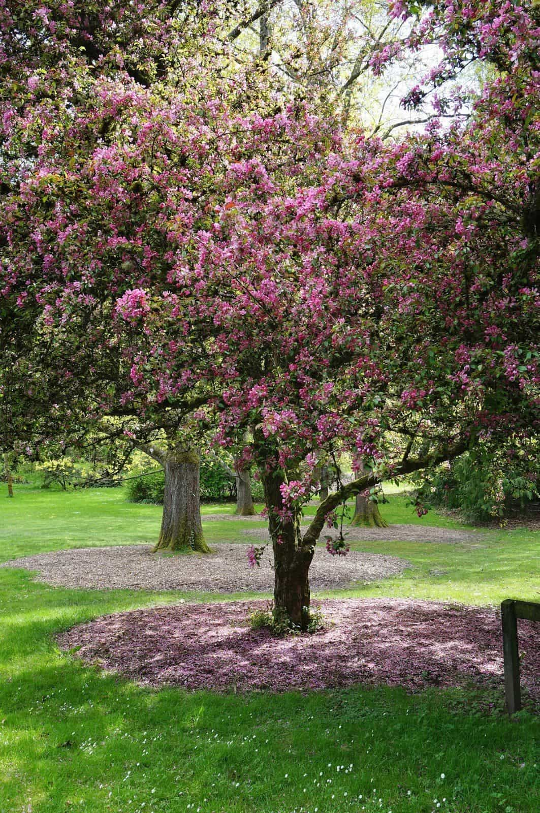 Ornamental Trees For Landscaping in 2020 Shade trees