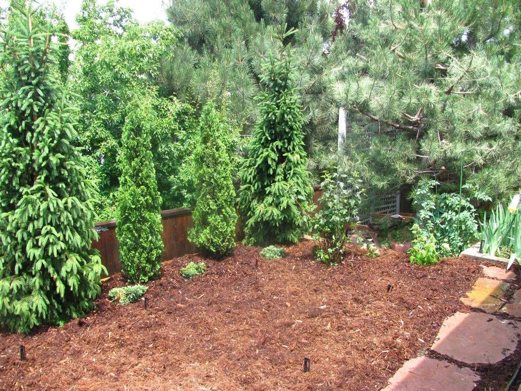 Idea For Evergreen Landscaping Landscape Designs For Your Home Privacy Landscaping Backyard Landscape Design Diy Privacy Landscaping