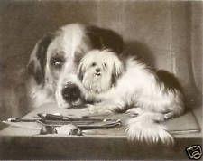 "MALTESE / SAINT BERNARD DOG FINE ART PRINT ""ENGRAVING"" Edwin Landseer Newfoundland"