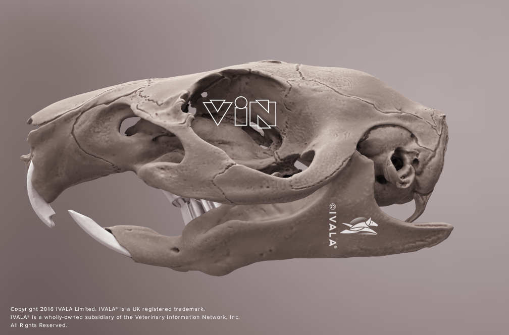 Want to learn about veterinary anatomy? In this 3D, interactive ...