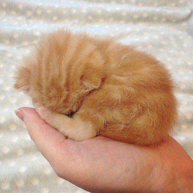 Photo of ¡Ama los gatos lindos y como OMG! obtener algunos usted mismo un gato adorable pawtastic appar …