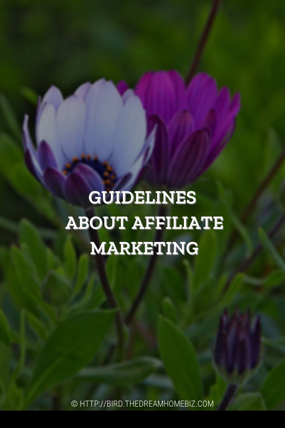 9 Growing Affiliate Marketing Trends To Check Out In 2020