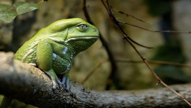 24 Photos of Weird and Goofy Looking Frogs