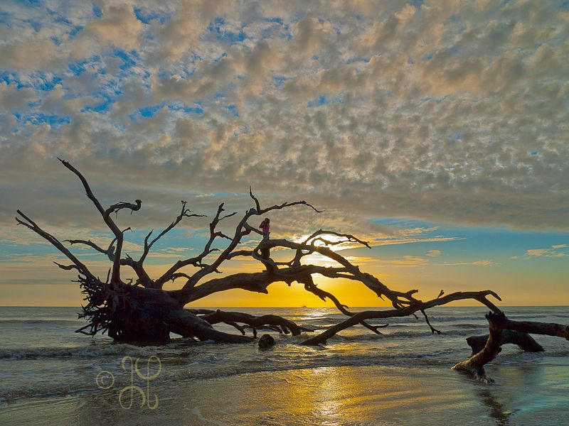 Driftwood Beach Jekyll Island Part 1