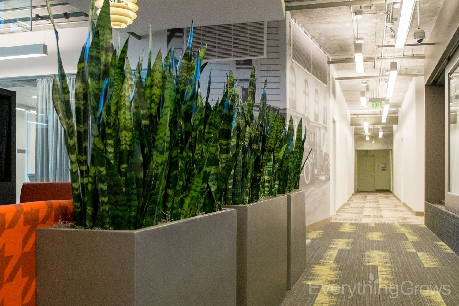 interior office plants. sansevieria earth wall office plant interior plants