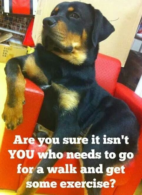 10 Best Rottweiler Memes Of All Time Rottweiler Funny