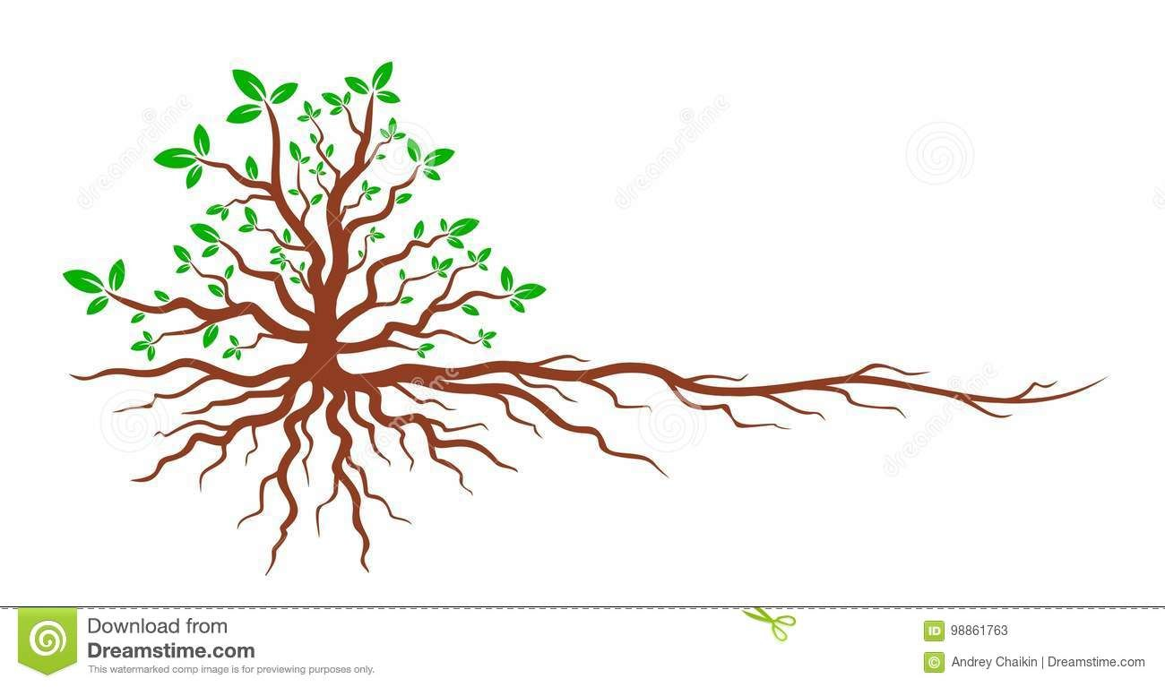 Illustration About Logo Of The Green Tree With The Root System Illustration Of Branches Leaves Nat Blossom Tree Tattoo Roots Logo Cherry Blossom Tree Tattoo