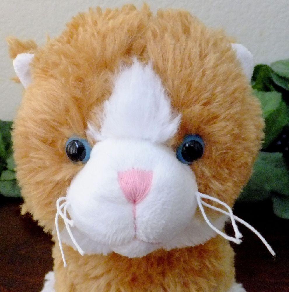 Orange White Tabby Kitty Cat Blue Eyes Whiskers Best Made