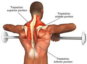 Image result for Traps (Trapezius) anatomy