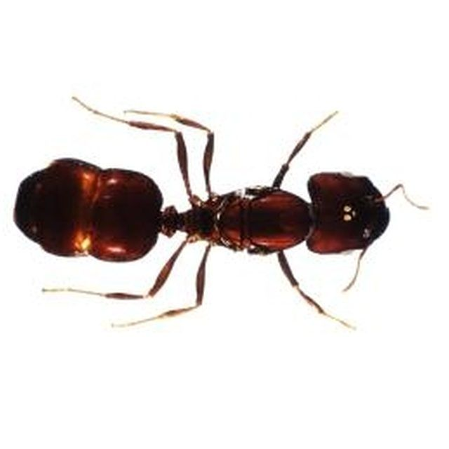 You Can Use Various Household Spices To Get Rid Of Ants In Your House Kill Ants Black Ants