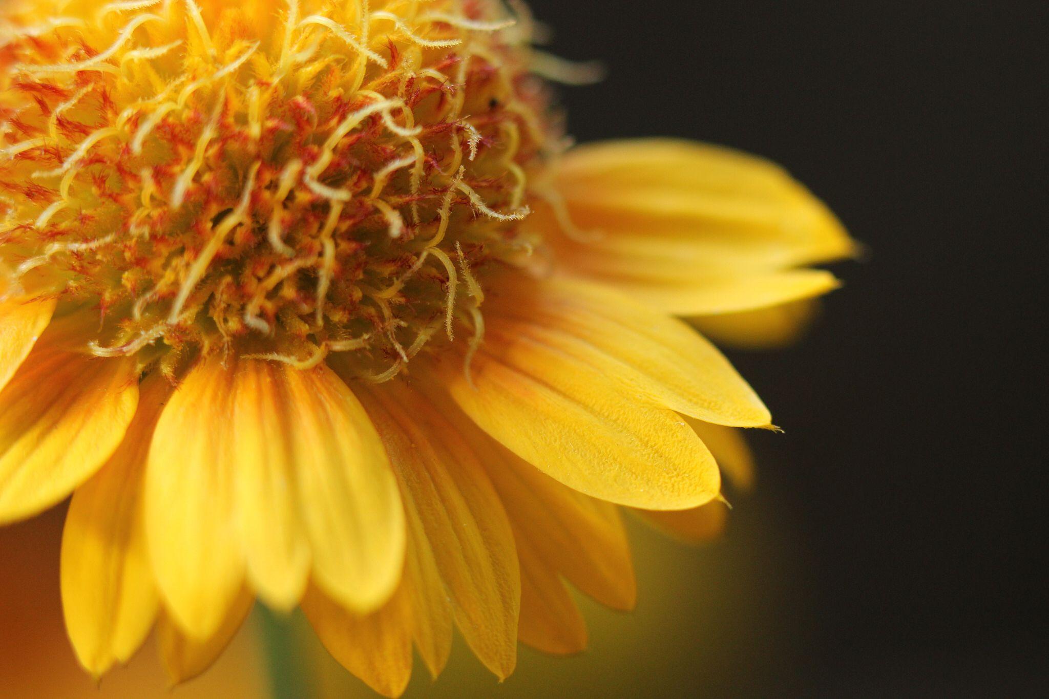 summerflower 2014