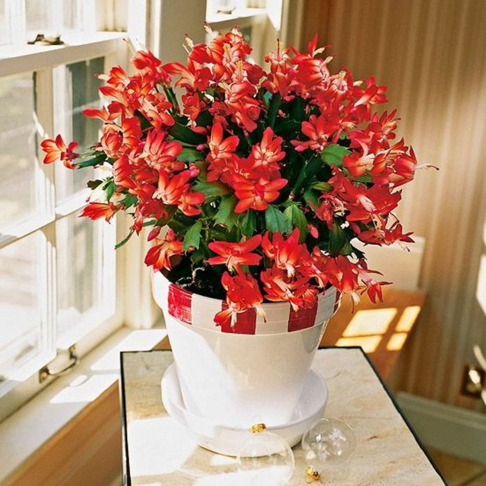savourez la beaut de la plante d int rieur dans notre galerie fleurs rouges plantes et. Black Bedroom Furniture Sets. Home Design Ideas
