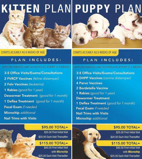 Puppy Kitten Plans Monte Vista Small Animal Hospital Small Animal Hospital Feline Distemper Puppies