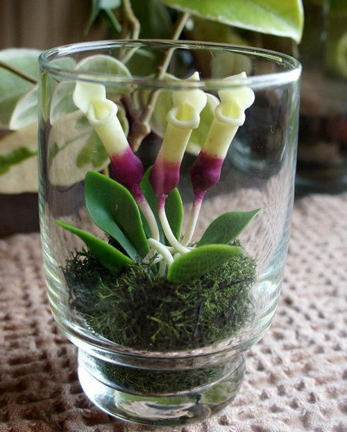 mini terrarium carnivorous pitcher plant in recycled glass. Black Bedroom Furniture Sets. Home Design Ideas