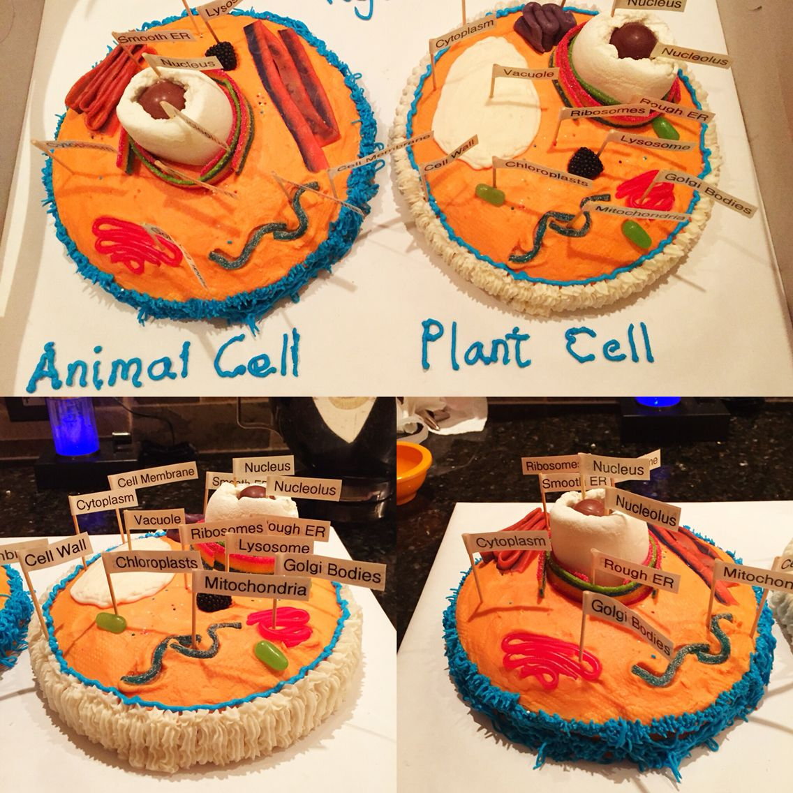 plant cell and animal cell model  cake  u0026 candy